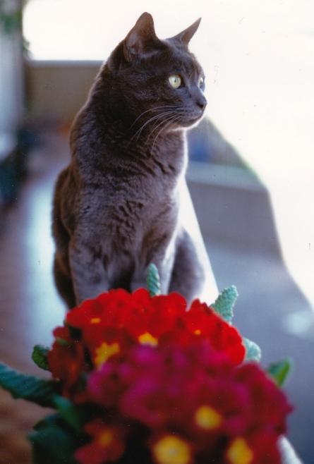 Gabriella Melis e il gatto Elvis_NEW