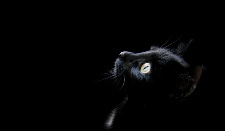 gli occhi del gatto 3