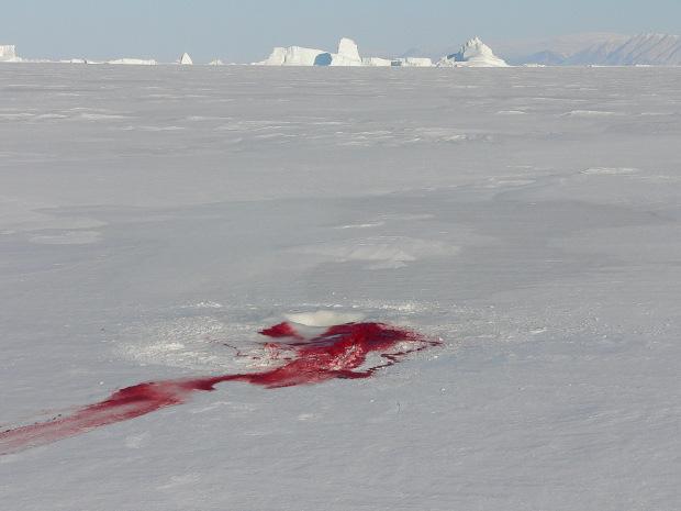 sangue sulla pista