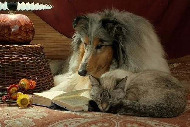 cane-legge-con-il-gatto