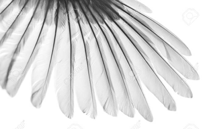 beauty in nature, bird wing on white