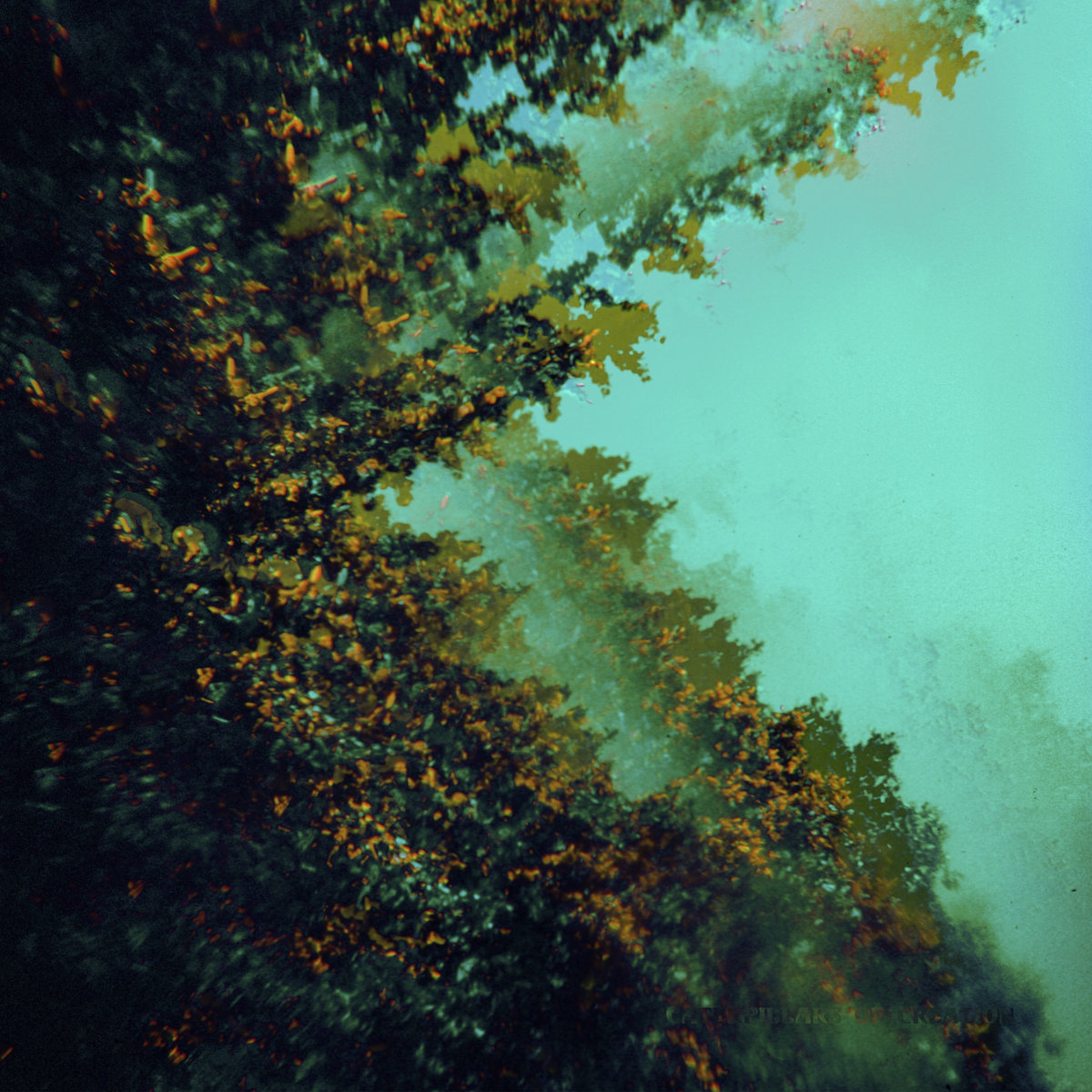 11-Polymoon - caterpillars of creation